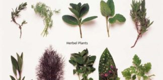 herbal plants in uttarakhand